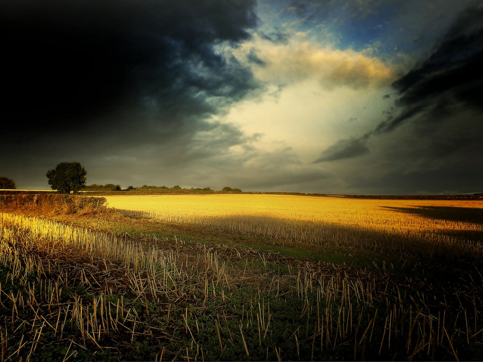 Великобритания поле