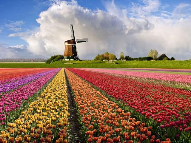 Нидерланды 3